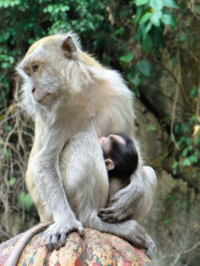 Scimmia 2 del bambino e della madre immagini stock libere da diritti