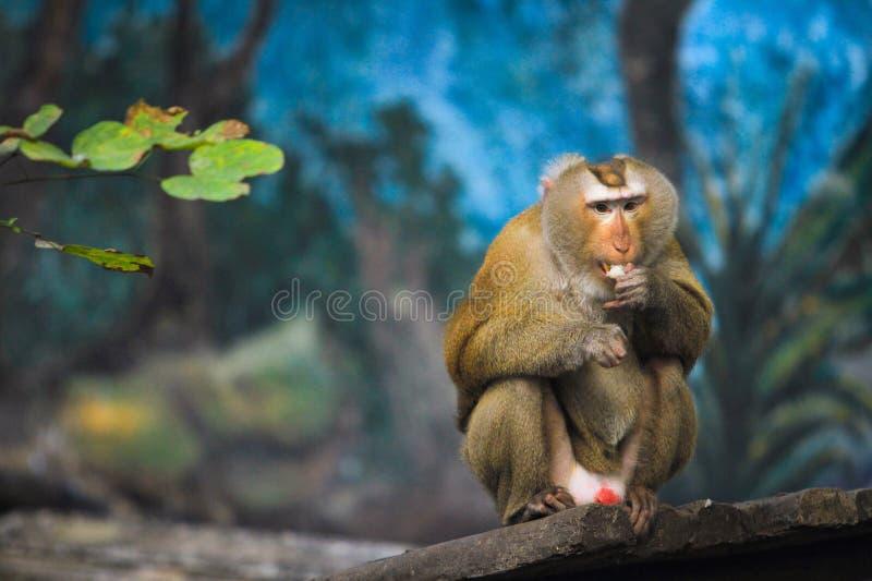 Scimmia del primo piano A che si siede su un pezzo di legno in un Forest Park immagine stock