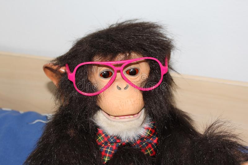 Scimmia divertente fotografia stock libera da diritti