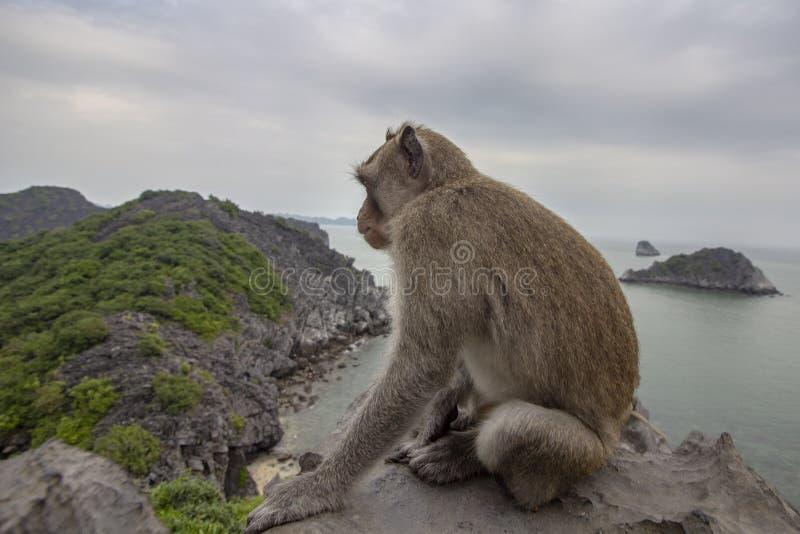 Scimmia nella cima del supporto della baia di Lan Ha dello scenario della spiaggia dell'isola, destinazione del punto di riferime immagine stock libera da diritti