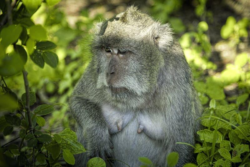 Scimmia sull'albero fotografia stock libera da diritti