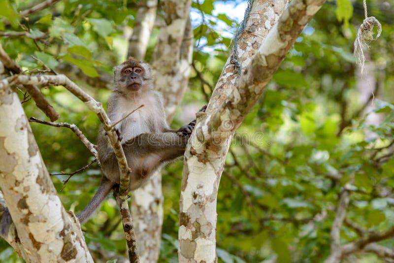 Scimmia sull'albero immagine stock