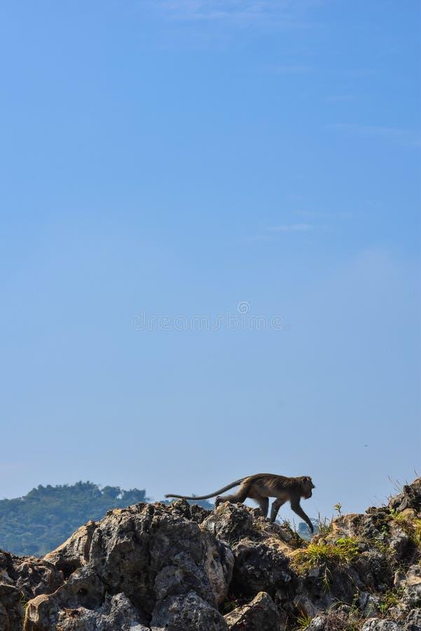Scimmia sulla cima di roccia fotografia stock