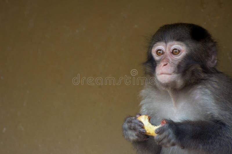 Scimmia sveglia del bambino