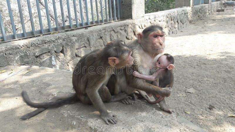 3 scimmie fotografie stock