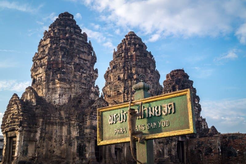Scimmie che scalano davanti ad un tempio immagini stock