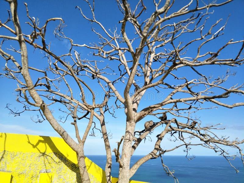Scimmie sull'albero fotografie stock