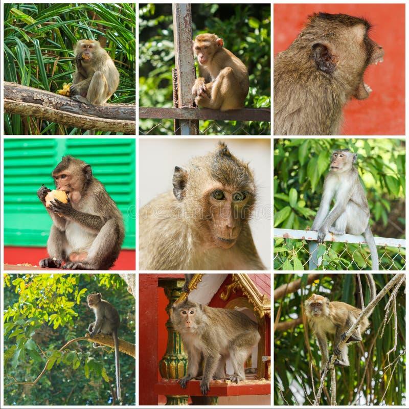 Scimmie sveglie fotografia stock libera da diritti