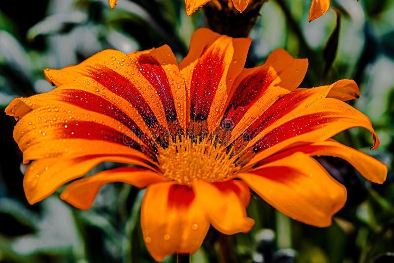 Scintilla su un fiore fotografia stock libera da diritti