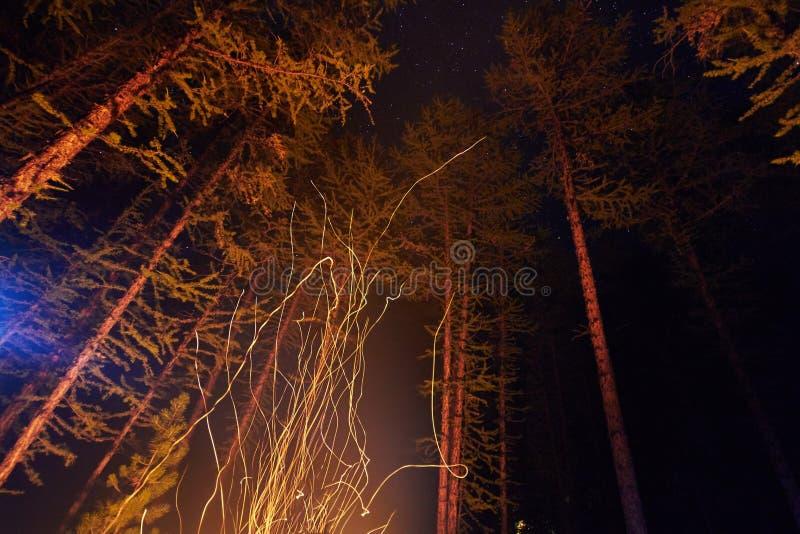 Scintille a partire da una notte del falò nel legno che vola nel cielo Fuoco nel legno sotto un cielo stellato, gli alberi illumi immagine stock