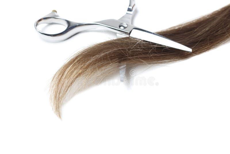 Scisors och brunt hår som isoleras på vit bakgrund, kopieringsutrymme arkivfoton