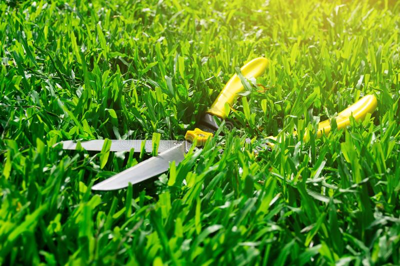 Scissors cut the grass on the lawn stock photos