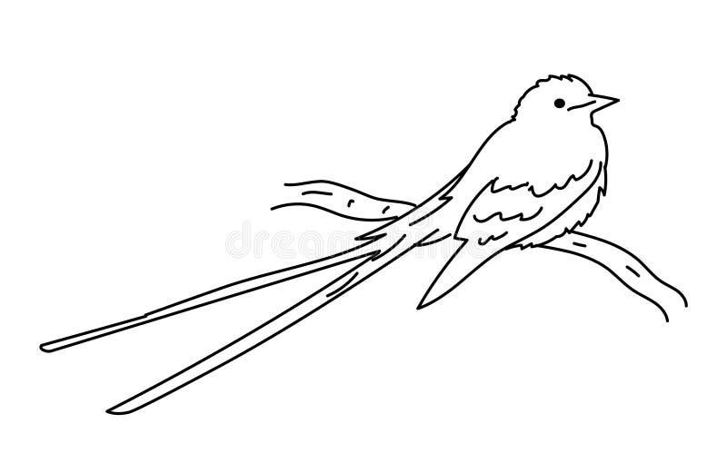 Flycatcher stock vector. Illustration of white, style ...