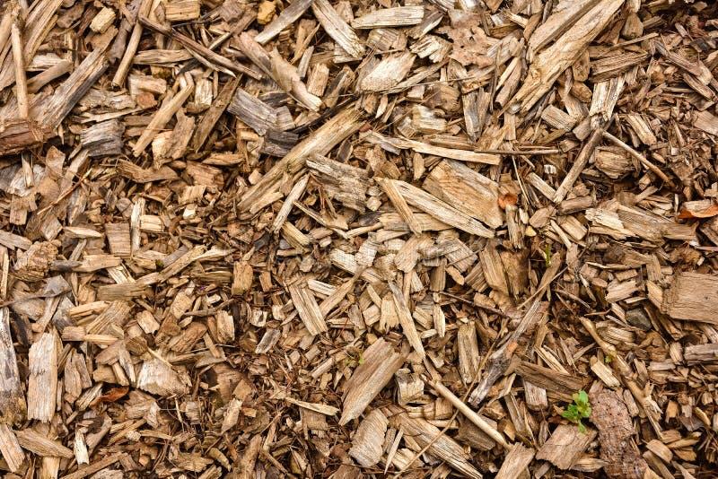 Sciure en bois photo libre de droits