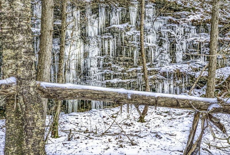 Scogliera coperta di ghiaccio ed alberi nell'inverno immagini stock libere da diritti