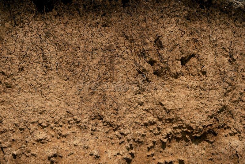 Scogliera costiera dell'argilla come struttura del fondo fotografie stock