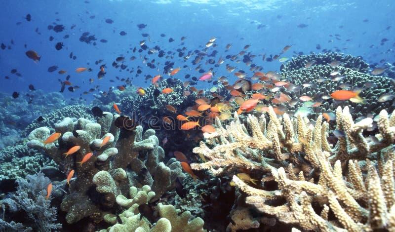 Scogliera dell'Indonesia immagini stock