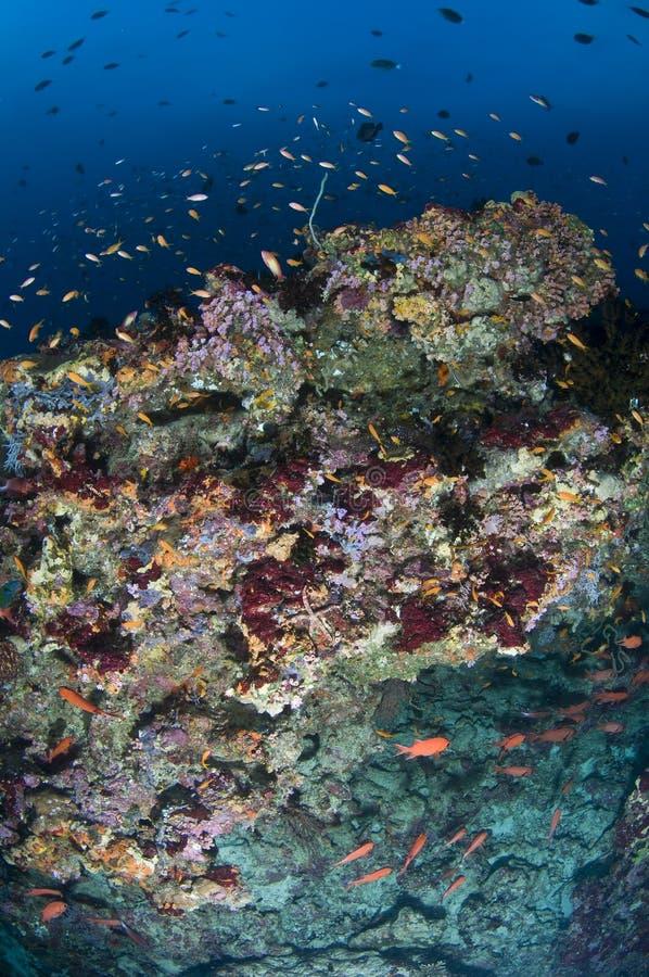 Scogliera e banco colorato dei pesci immagini stock libere da diritti