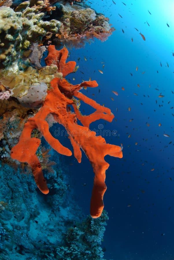 Scogliera tropicale Colourful immagini stock libere da diritti