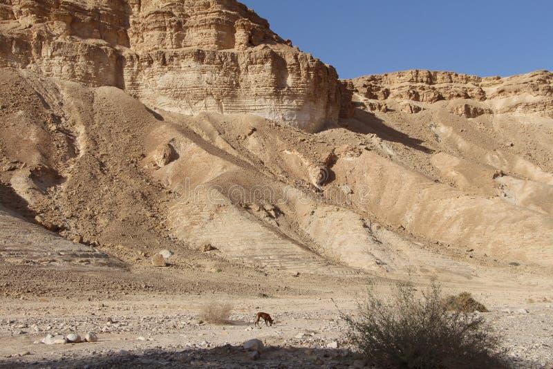 Scogliere del deserto fotografie stock