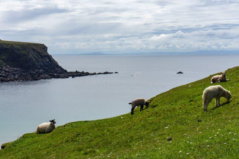 Scogliere dell'oceano in Irlanda del Nord fotografie stock libere da diritti