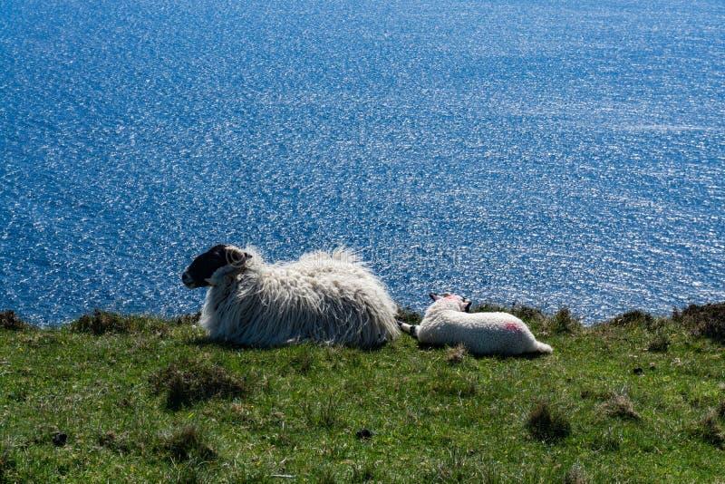 Scogliere dell'oceano in Irlanda del Nord fotografie stock