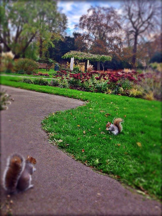 scoiattoli fotografie stock