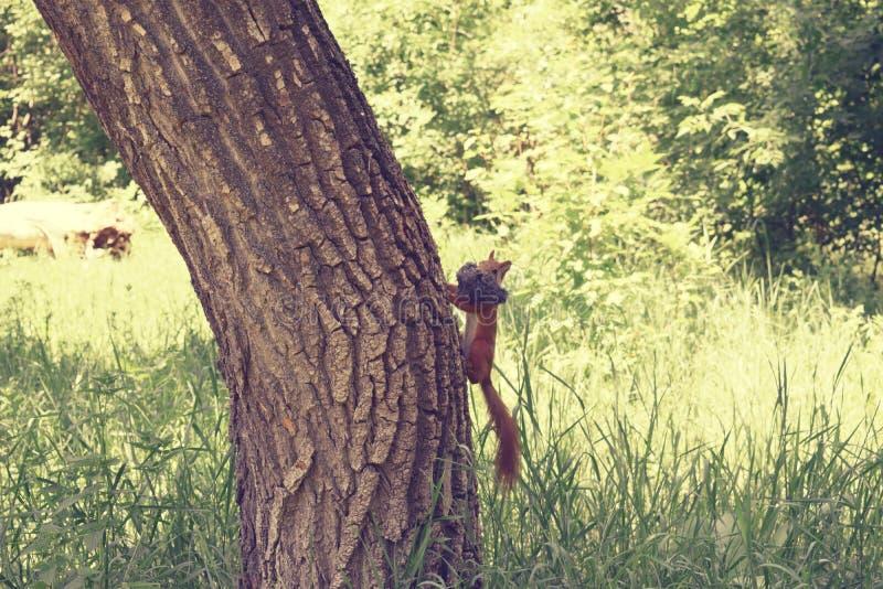 Download Scoiattolo sull'albero fotografia stock. Immagine di folto - 117980066