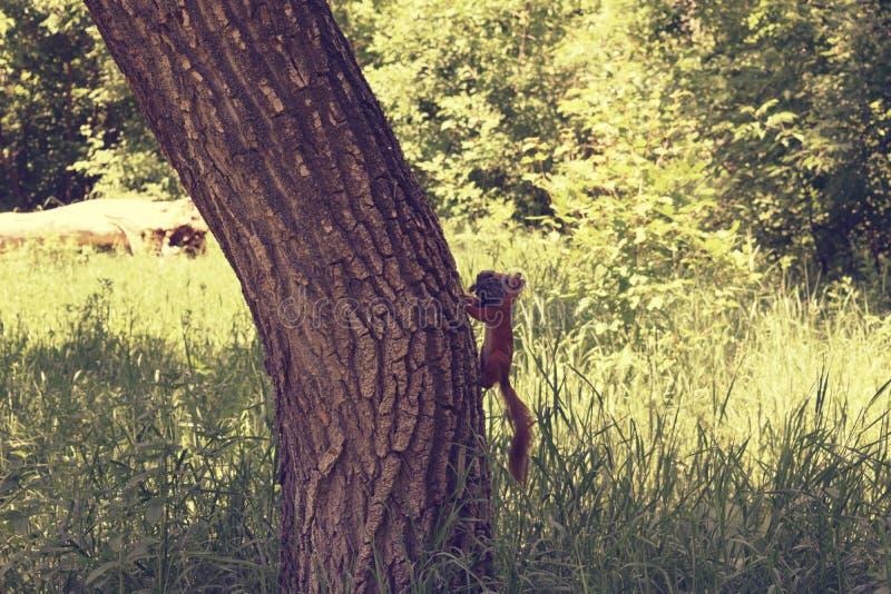 Download Scoiattolo sull'albero fotografia stock. Immagine di creatura - 117980078
