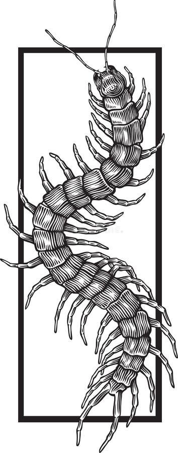 Scolopendra gigantea vector illustration