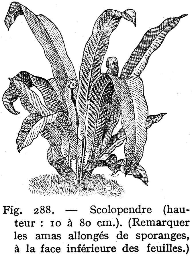 Scolopendre Free Public Domain Cc0 Image