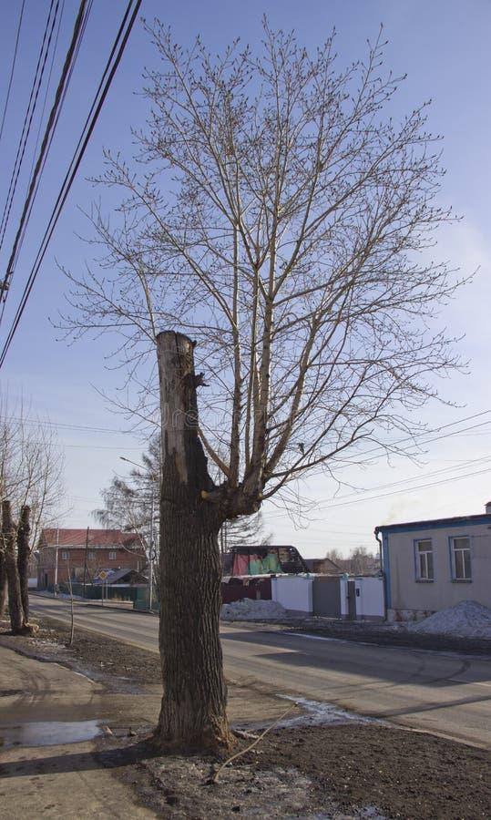Sconosciuto un albero fotografia stock libera da diritti