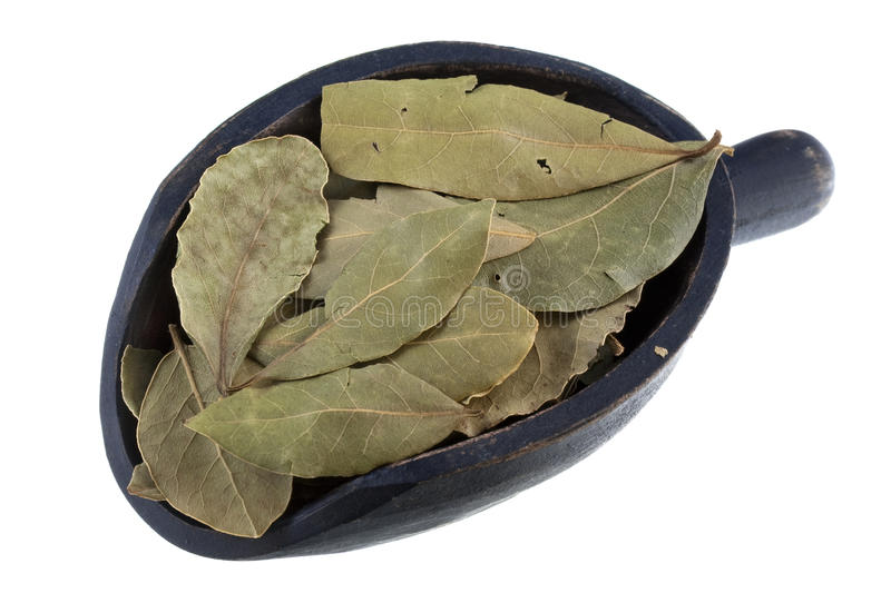Scoop of dried bay leaves royalty free stock photo