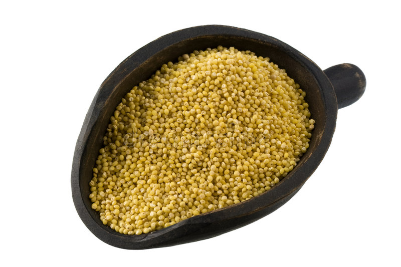 Scoop of hulled millet stock image