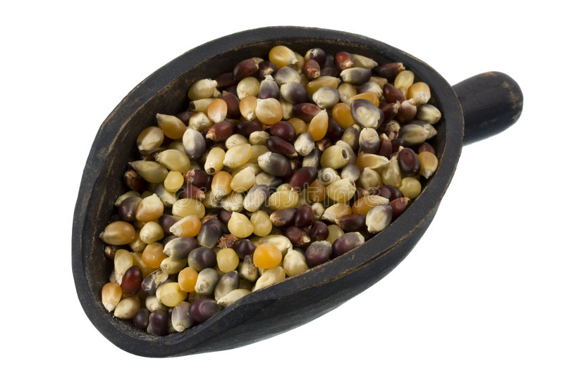 Scoop of multicolor indian corn kernel royalty free stock photography