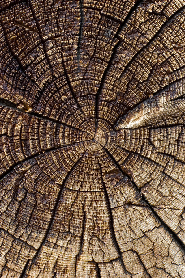 Download Scorched wood stock photo. Image of texture, scorched - 7223990
