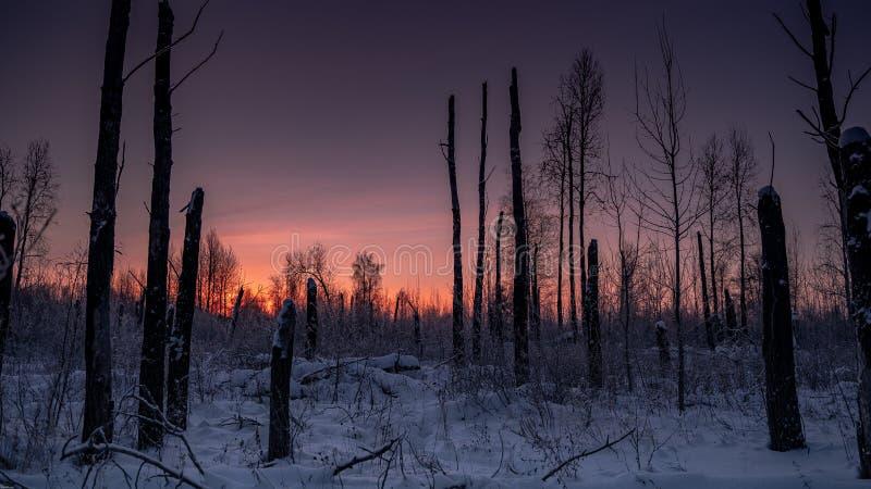 Scorcher las w zimie zdjęcia royalty free