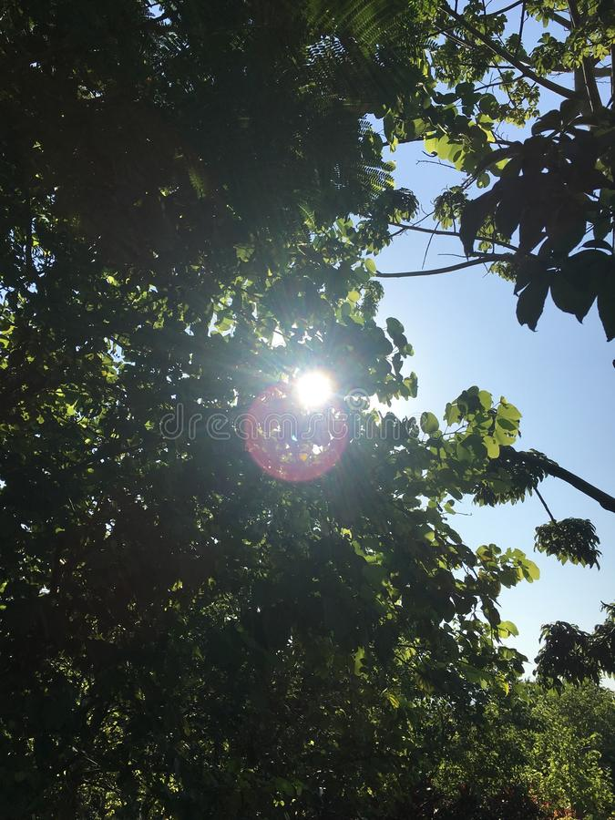 Sunshine from the cracks in the trees. In the scorching summer, enjoy the sunshine from the cracks of the trees stock photography