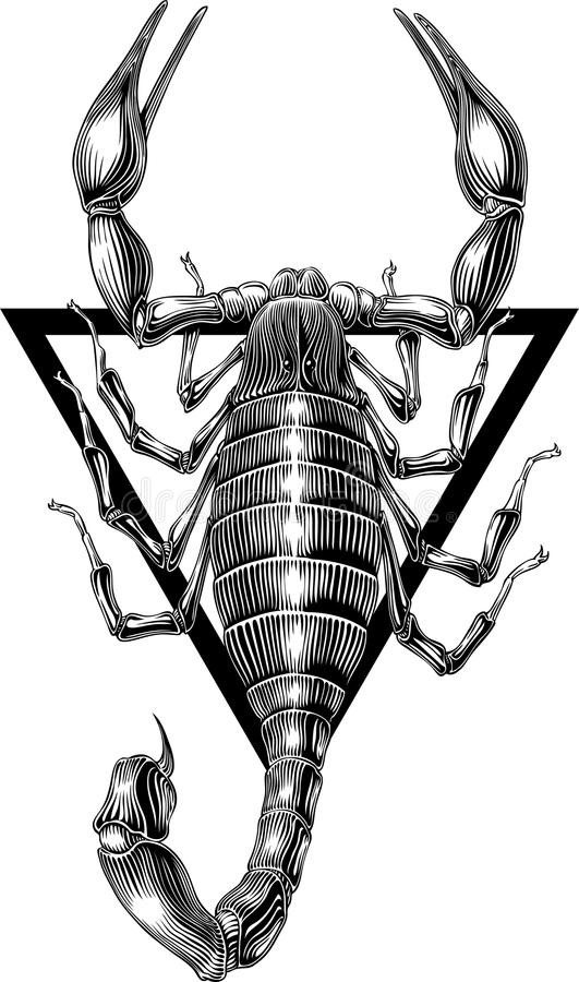 Download Scorpion stock vector. Image of vector, isolated, symbol - 15522138