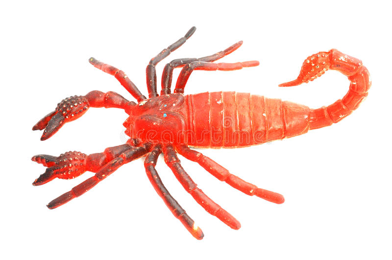 Download Scorpion stock image. Image of creature, pedipalp, gripping - 27445543