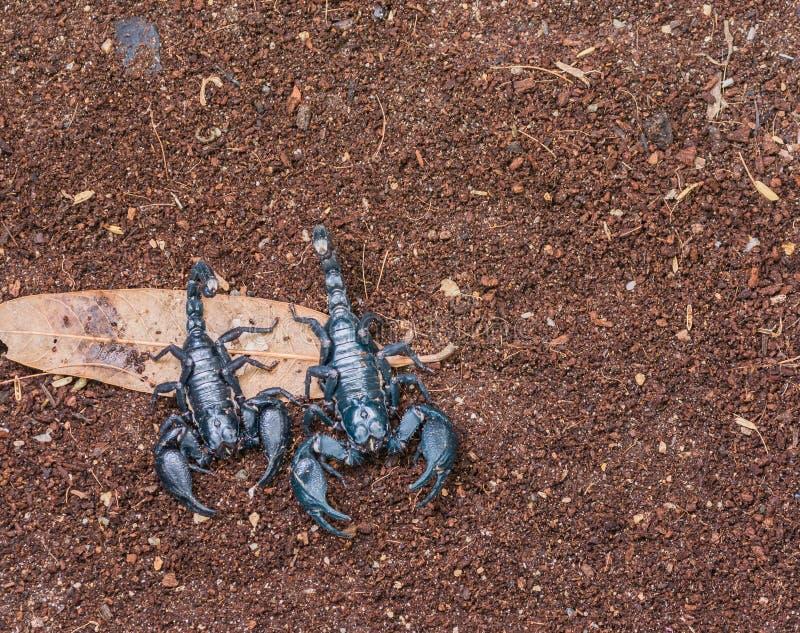 scorpion imagen de archivo libre de regalías