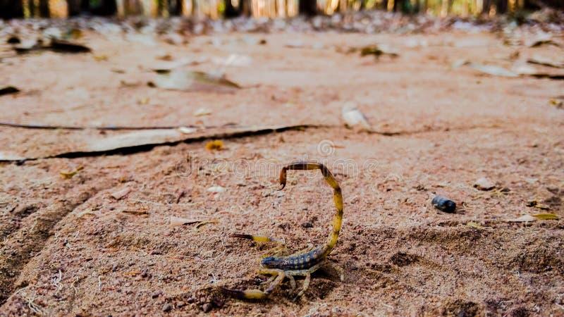 scorpion foto de archivo