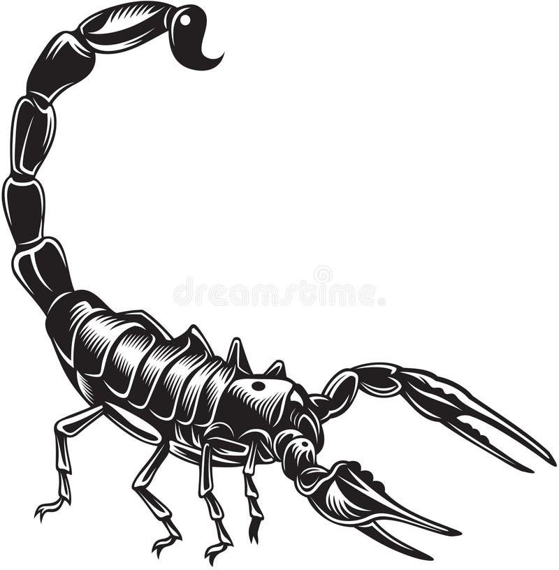 Scorpion vektor illustrationer