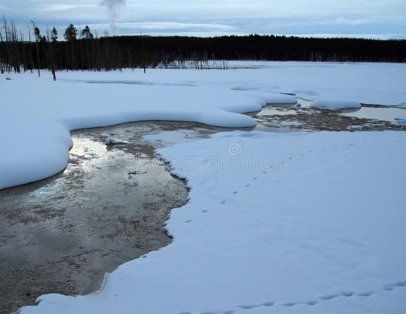 Download Scorra Dal Geyser Durante L'inverno Nel Parco Nazionale Di Yellowstone Nel Wyoming U.S.A. Immagine Stock - Immagine di caldo, bacino: 117981895