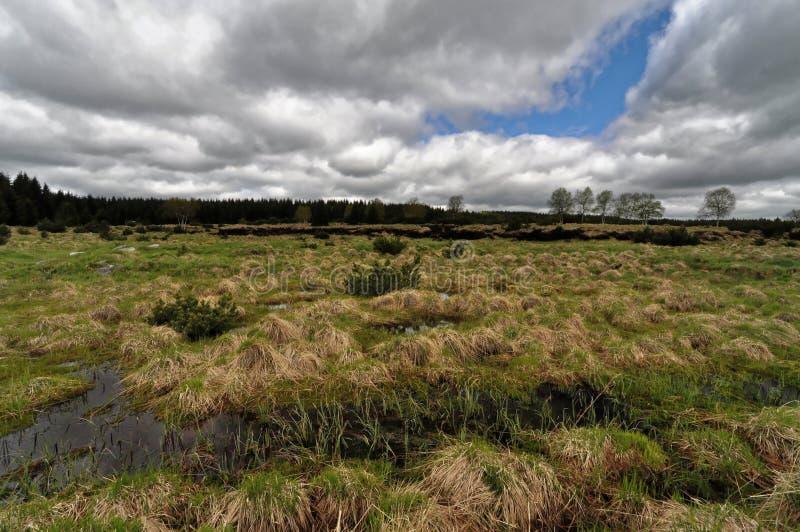 Scorrimenti dell'acqua nell'erba immagini stock libere da diritti