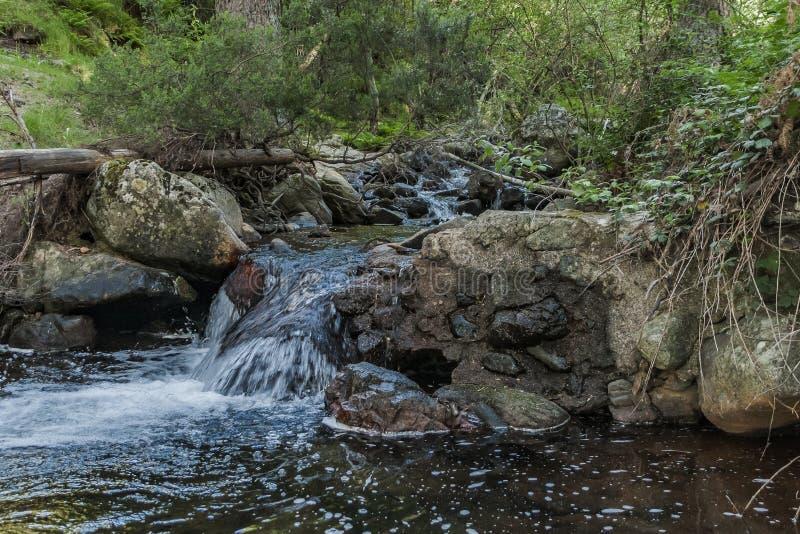 Scorrimenti dell'acqua in primavera fotografia stock libera da diritti