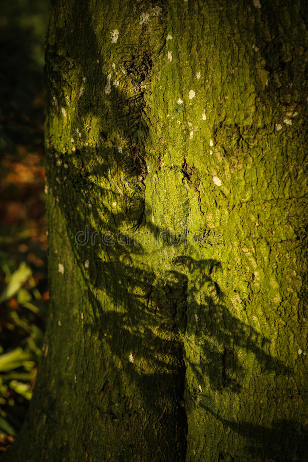 Scortecci su un albero un giorno soleggiato fotografia stock