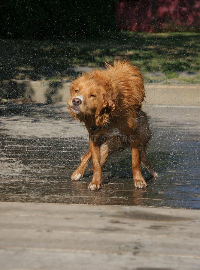 Scossa 5 del cane fotografia stock libera da diritti