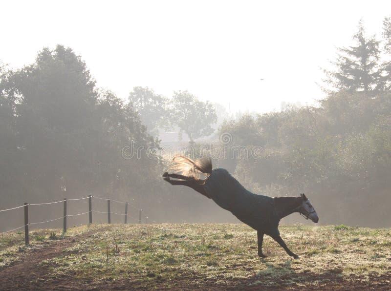 Scossa del cavallo fotografie stock