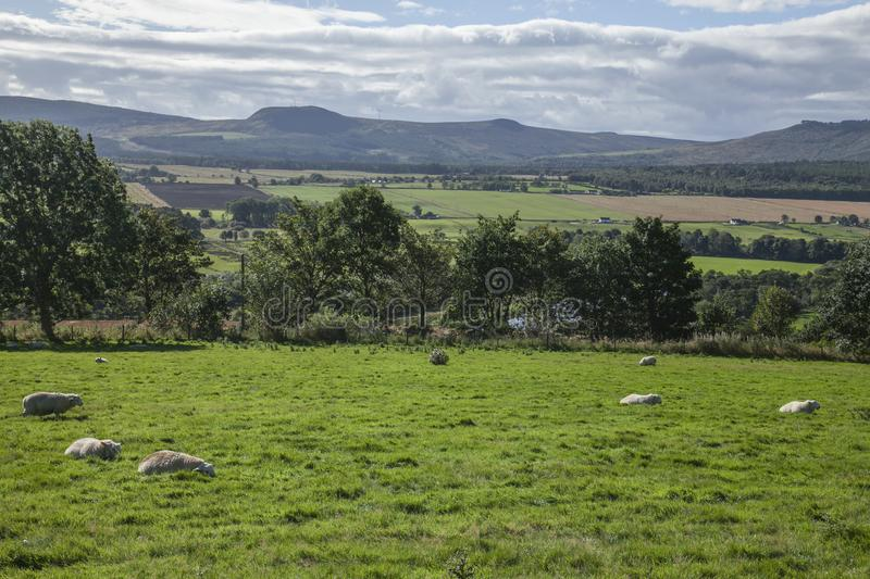 Scotland, the UK - meadows, sheep and hills. This image shows a view of Scotland, the UK. It was taken on a sunny day in summer 2016. We can see some sheep in stock image